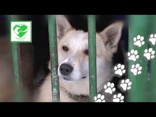 13 февраля пункт передержки животных организует в Чебоксарах выставку-раздачу собак
