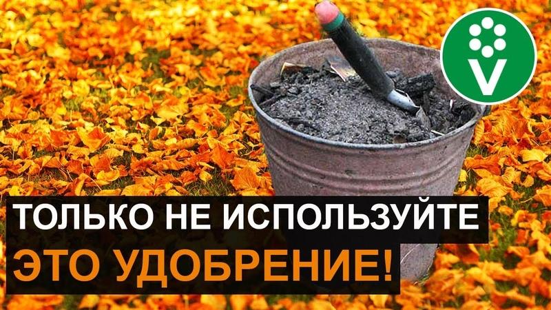 Какие УДОБРЕНИЯ ВНОСИТЬ ОСЕНЬЮ для повышения плодородия почвы