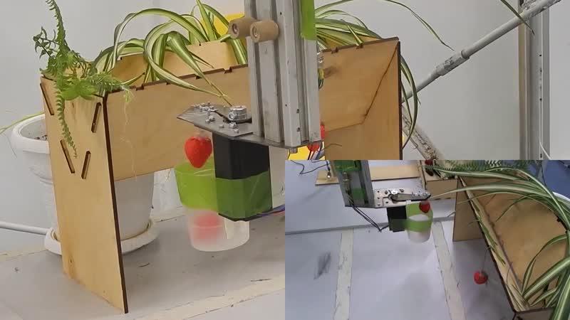 Школьники «Сириуса» создали манипулятор для сбора созревшей клубники