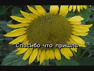 Караоке Игорь Николаев - Малиновое вино