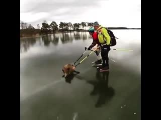 Спасение животных помогли кабанчику