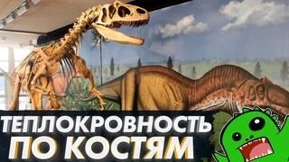 Как обнаружить ТЕПЛОКРОВНОСТЬ по костям? Теплокровность и динозавры [ФИЗИОЛОГИЯ ДИНОЗАВРОВ]