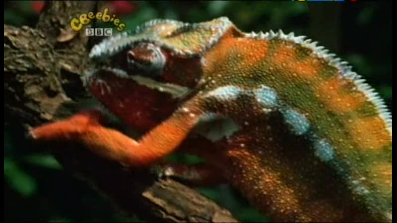 S05 Our Planet Animals Changing Colours And Seasons