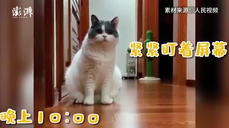 Теперь кот обоссыт хозяину вебку
