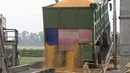 МВД Украины: Прожорливые мыши съели стратегический запас зерна.