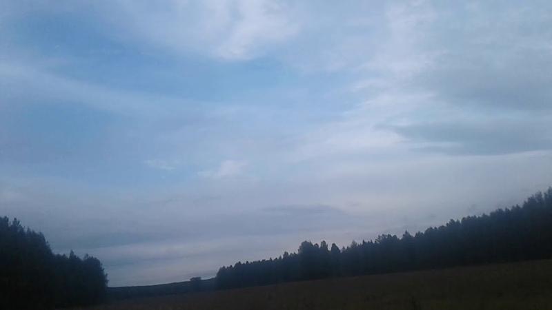 поле на хуторе Денисков Устьянский район Архангельская область август 2020 года