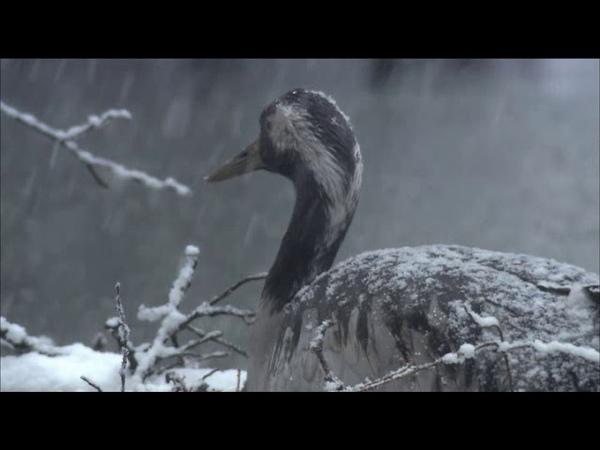 Дикая природа Германии сезон 1 серия 1 Леса реки Шпрее Der Spreewald The Spreewald
