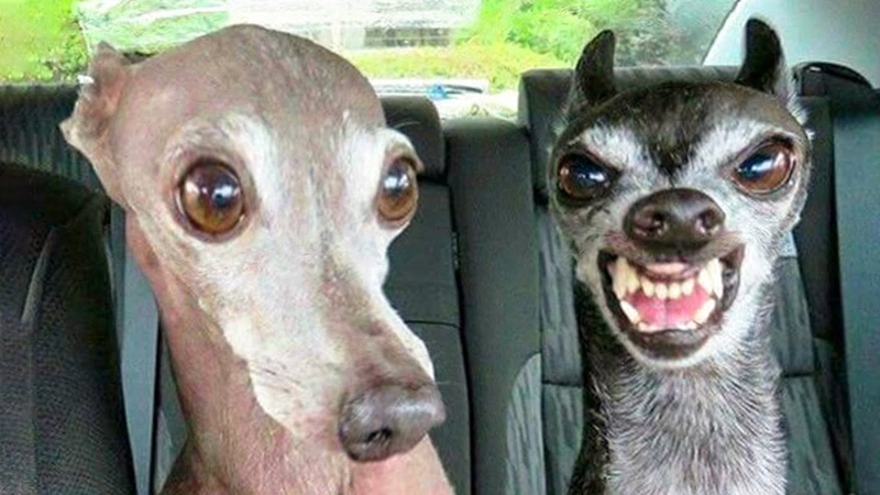 🤣 Funniest 🐶 Dogs And 😻Cats Try Not To Laugh Funny Pet Animals' Life 😇