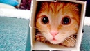 КОШКИ 2019 Смешные коты Приколы с кошками и котиками приколы с котами приколы про кошек Funny Cats