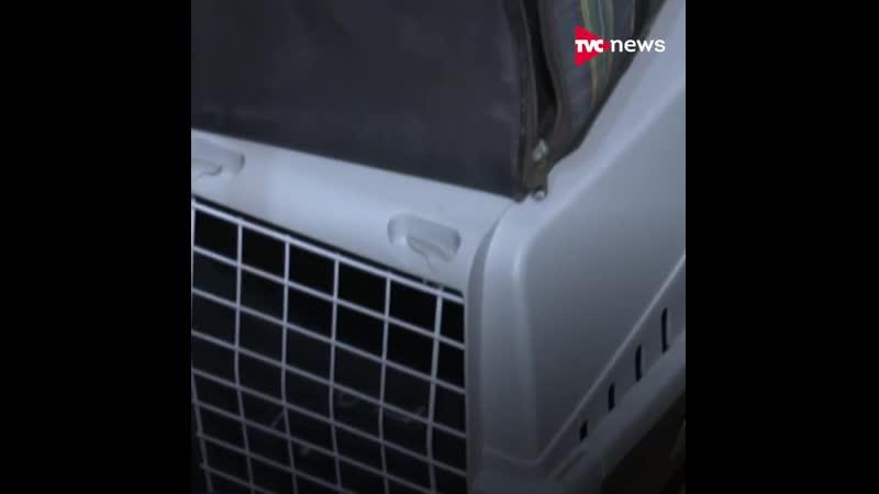 Потерявшегося в аэропорту кота вернули спустя пять месяцев хозяевам