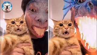 Dragon Filter Frightens This Cat - Try Not To Laugh | Pets Town