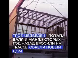 Семья медведей из оренбургской области нашла новый дом в Ингушетии