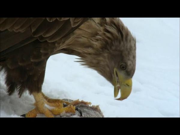 Дикая природа Германии сезон 1 серия 4 Северное побережье Померании