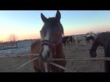ещё один день из жизни счастливых лошадей (часть 1)