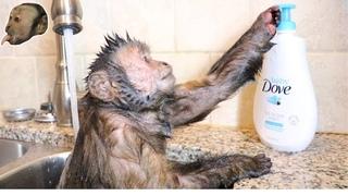 Capuchin Monkey Takes a Hot Relaxing Bath!