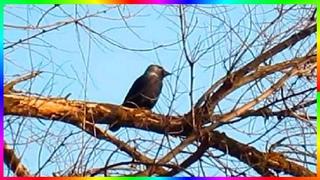 Галка работает дятлом Птицы осенью Видеозарисовки🍂🐦