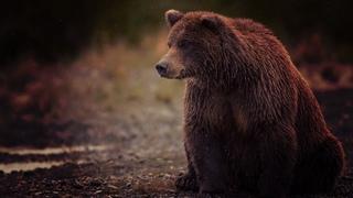 Новая дикая природа Европы / 3 серия - Спасение медведей