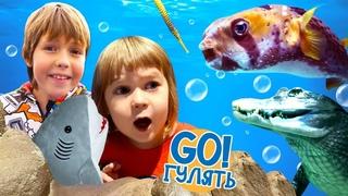 Бьянка и Адриан ищут маму Акулы! Океанариум в видео онлайн! - Москва куда сходить. Весёлые игры.