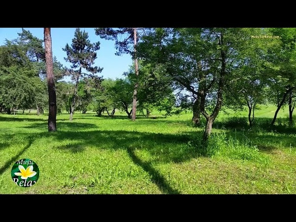 3 hours spring Forest Sounds and Birdsong for Deep Sleep or Relaxing