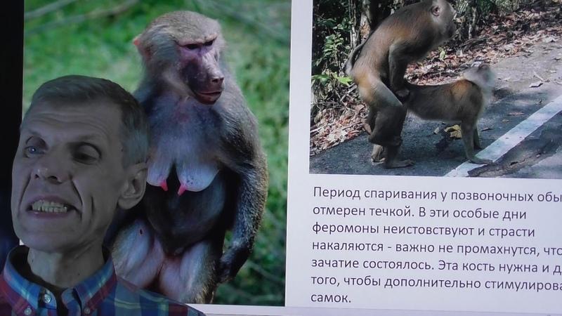 Сексуальная деградация бывших людей. Александр Белов 9 января 2020