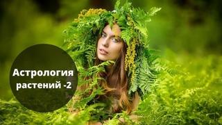 Магия трав | Астрология растений 2