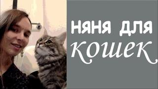 Няня для кошек   Знакомство
