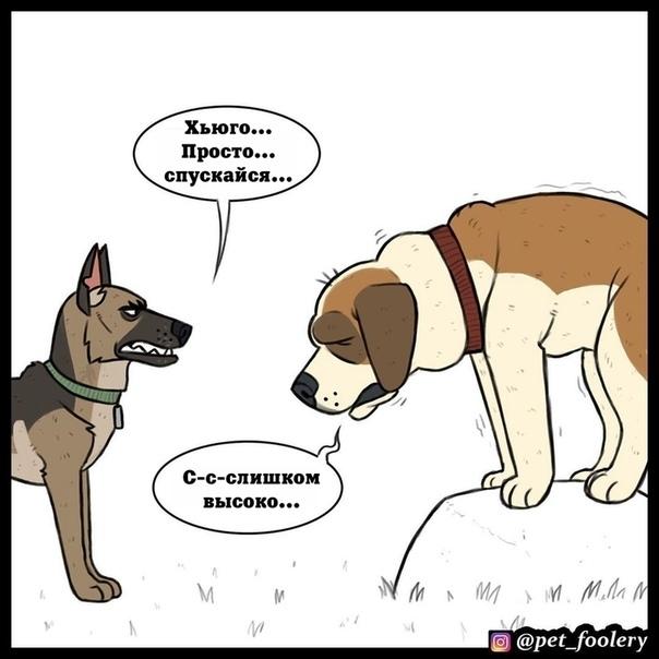 Брут и Хьюго Иллюстратор: Pet Foolery