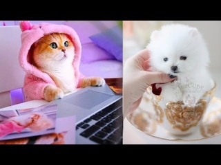Super cute kittens || Worlds most Cute and Funny Kittens || Part 5