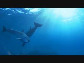 Medwyn Goodall - Dolphin Companion