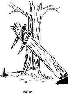 Лось, олень и кабан. Их повадки и следы, изображение №2