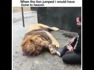 Imagine me a lion stuntin on the rest of the pride with sneakers on