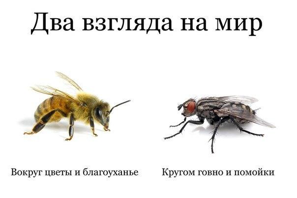 все деловые садятся ли пчелы на гавно каталоге