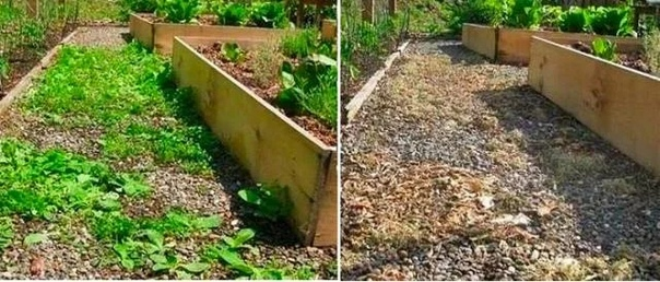 Уничтожаем сорняки без химии надолго!