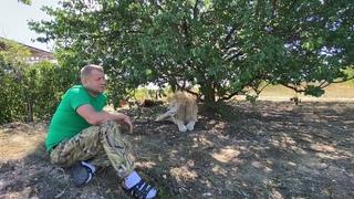 Почему львам НЕ НУЖНЫ ИГРУШКИ?