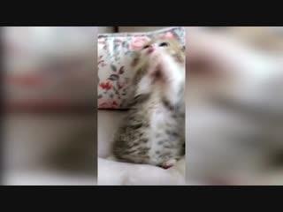 очень милый котенок
