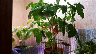 Выращиваю овощи в бутылках зимой! Огород в квартире. Март 2021
