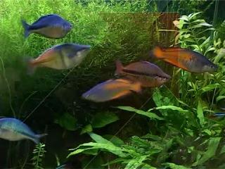 Жизнь с животными.Аквариумные рыбы.Часть2