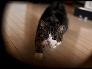Самый няшный кот в мире )лапуля