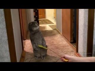 Кот услышал дверной звонок и очень удивился