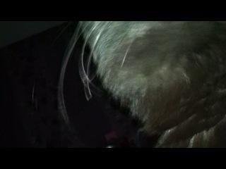 Кошкин прикол пока я сплю она жует мои три волосины