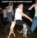 Фотоальбом Даниса Шакирова