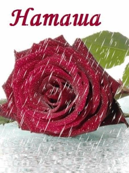 текст праздничного картинки для наташки с розами является одной самых