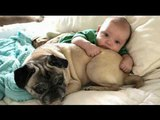 Funny Dogs and Babies Who needs a babysitter when you have the Cute dog &amp baby compilation 2018