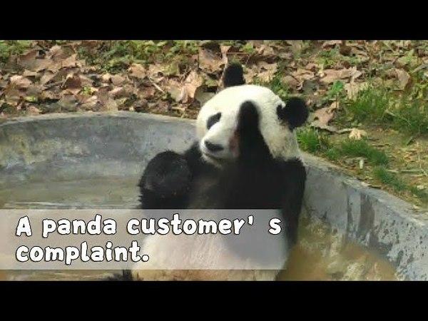 Panda Ying Ying Complans About Unfilled Bathtub | iPanda