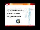Вебинар 2 03 18 Сухожильно-мышечные меридианы