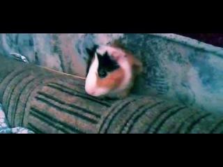 Пончик. часть 2) Побегал от испуга