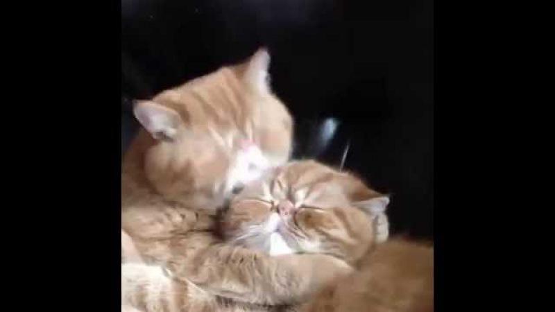 Сладких, картинка гиф котята целуются