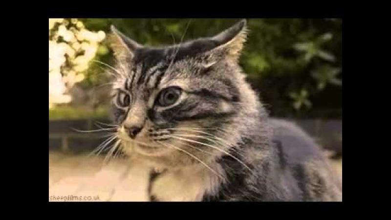 Прикол кот доцент