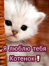 Картинка с надписью котенок я тебя люблю