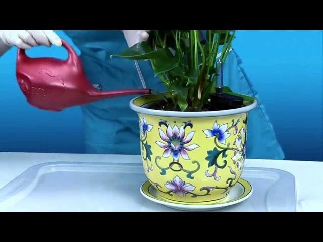 Автополив комнатных цветов olGGol